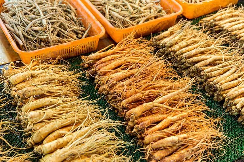 Le ginseng est utilisé depuis des milliers d'années par la médecine traditionnelle chinoise