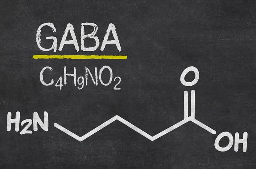 Des études montrent que le GABA pourrait être capable d'augmenter la masse musculaire