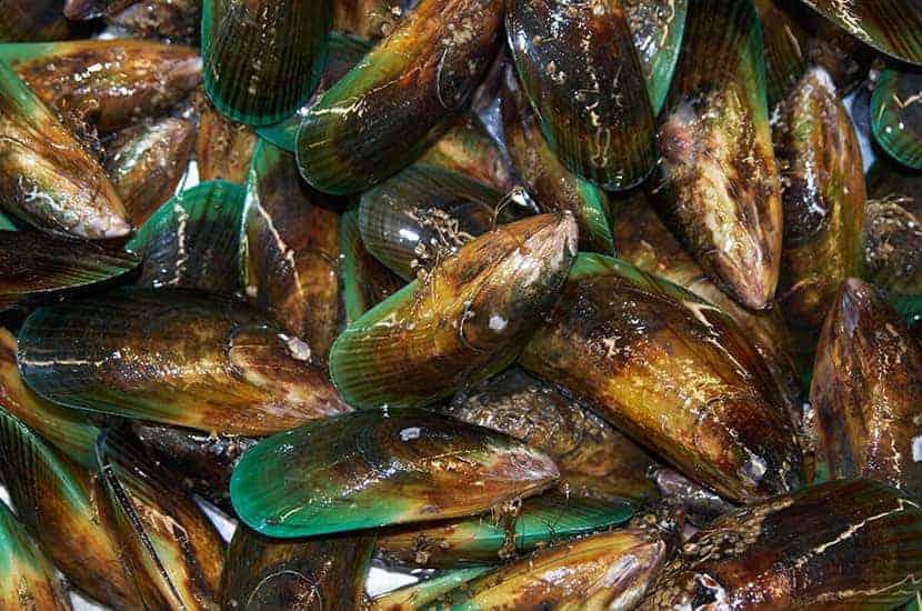 Les moules à lèvres vertes sont riches en vitamines B
